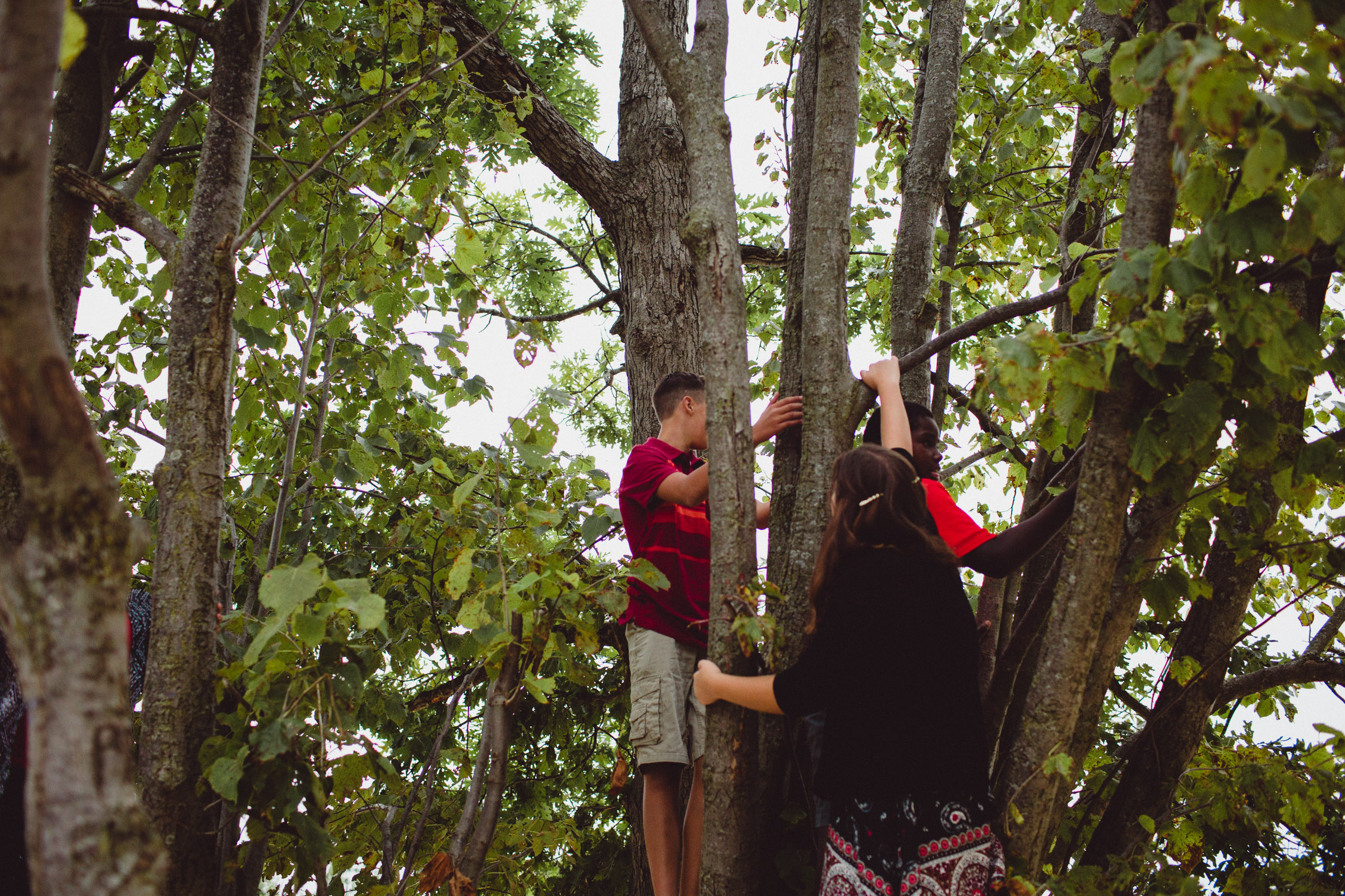 siblings exploring and climbing trees