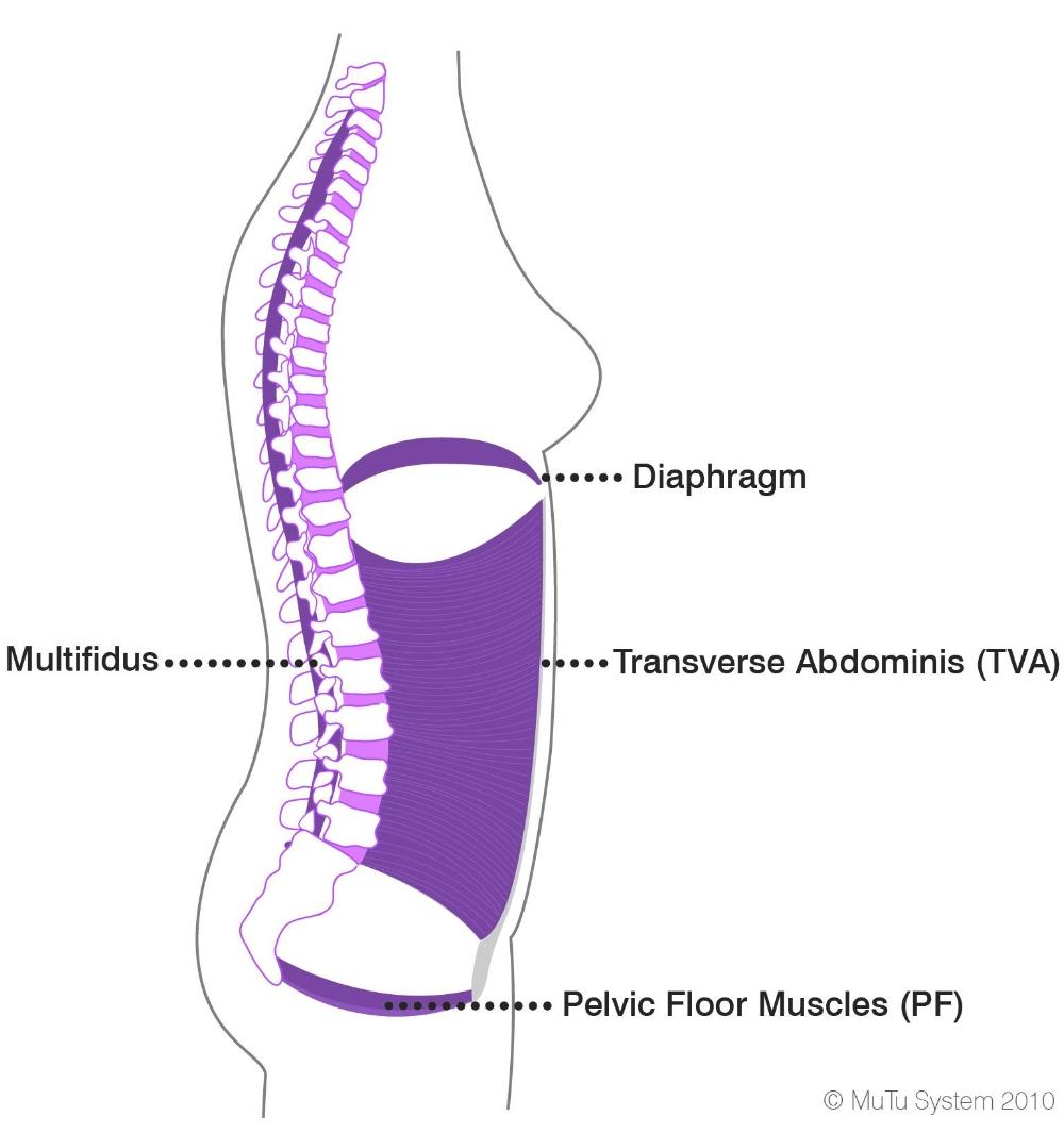Core Muscles 1.jpg