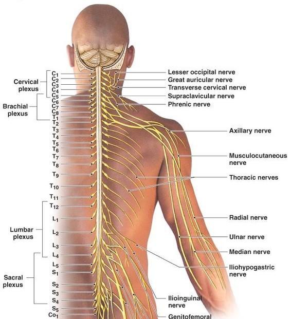 chiropractor burke disc pain
