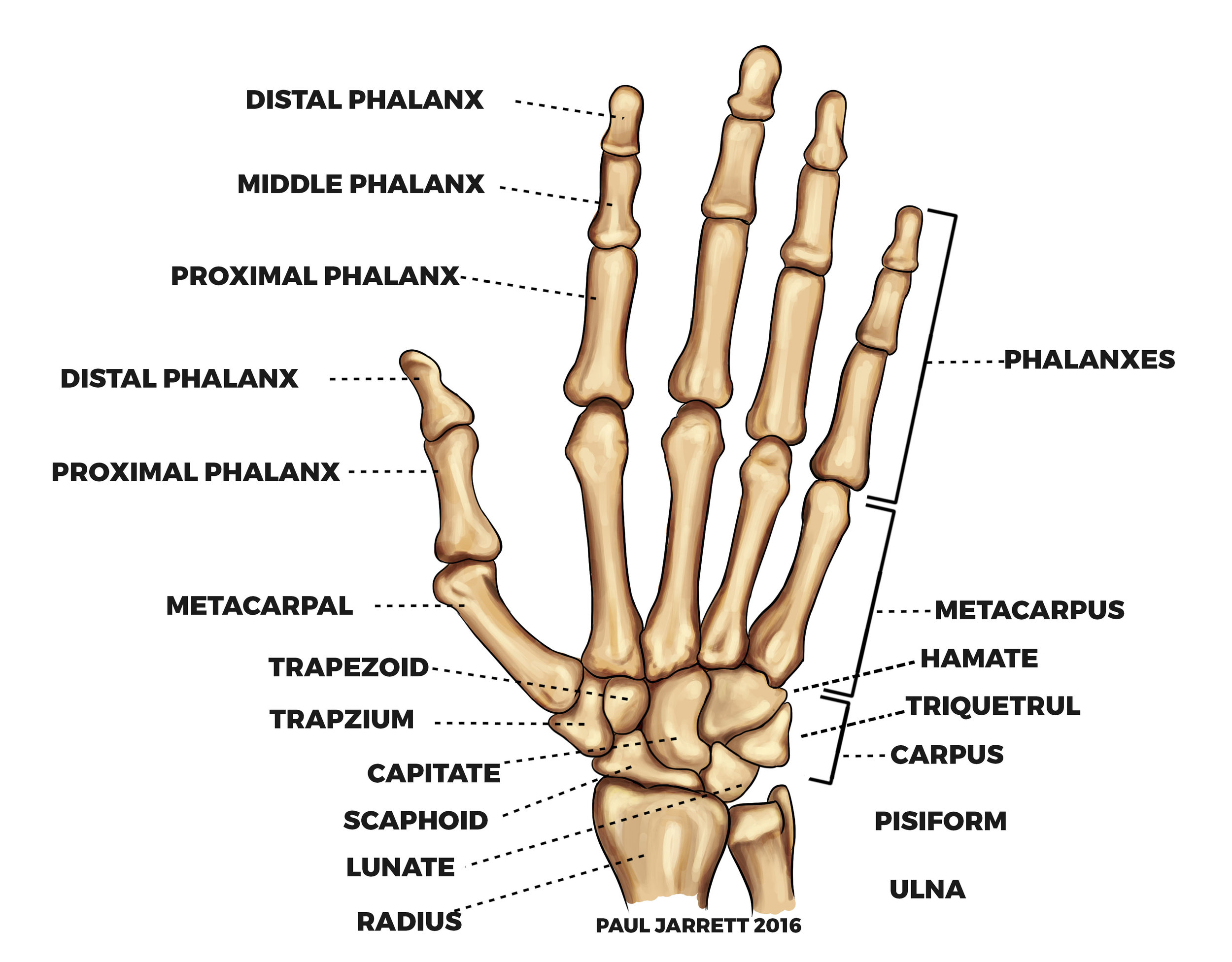 hand pain burke chiropractic chiropractor.jpg