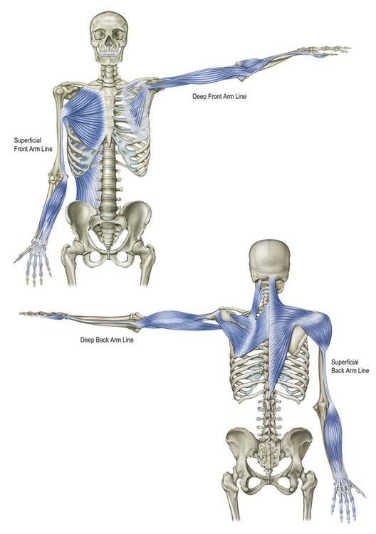 deep arm line chiropractic chiropractor burke virginia.jpg