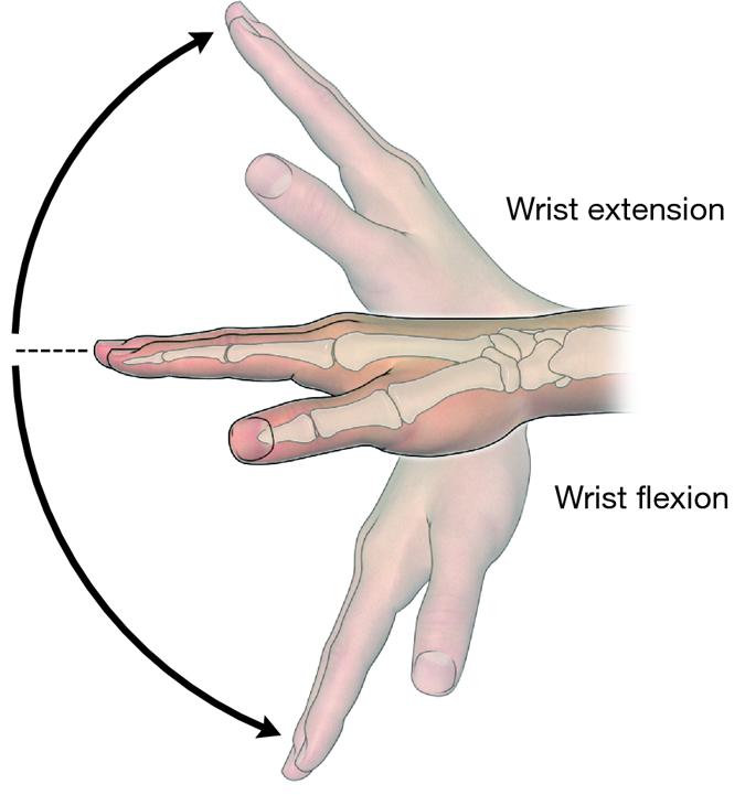 wrist ROM headache specialist chiropractor burke chiropractic.png