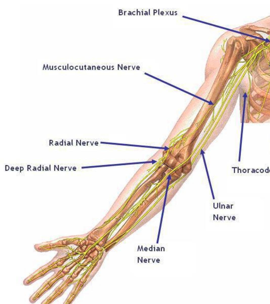 hand pain arm pain burke chiropractor chiropractic.jpg