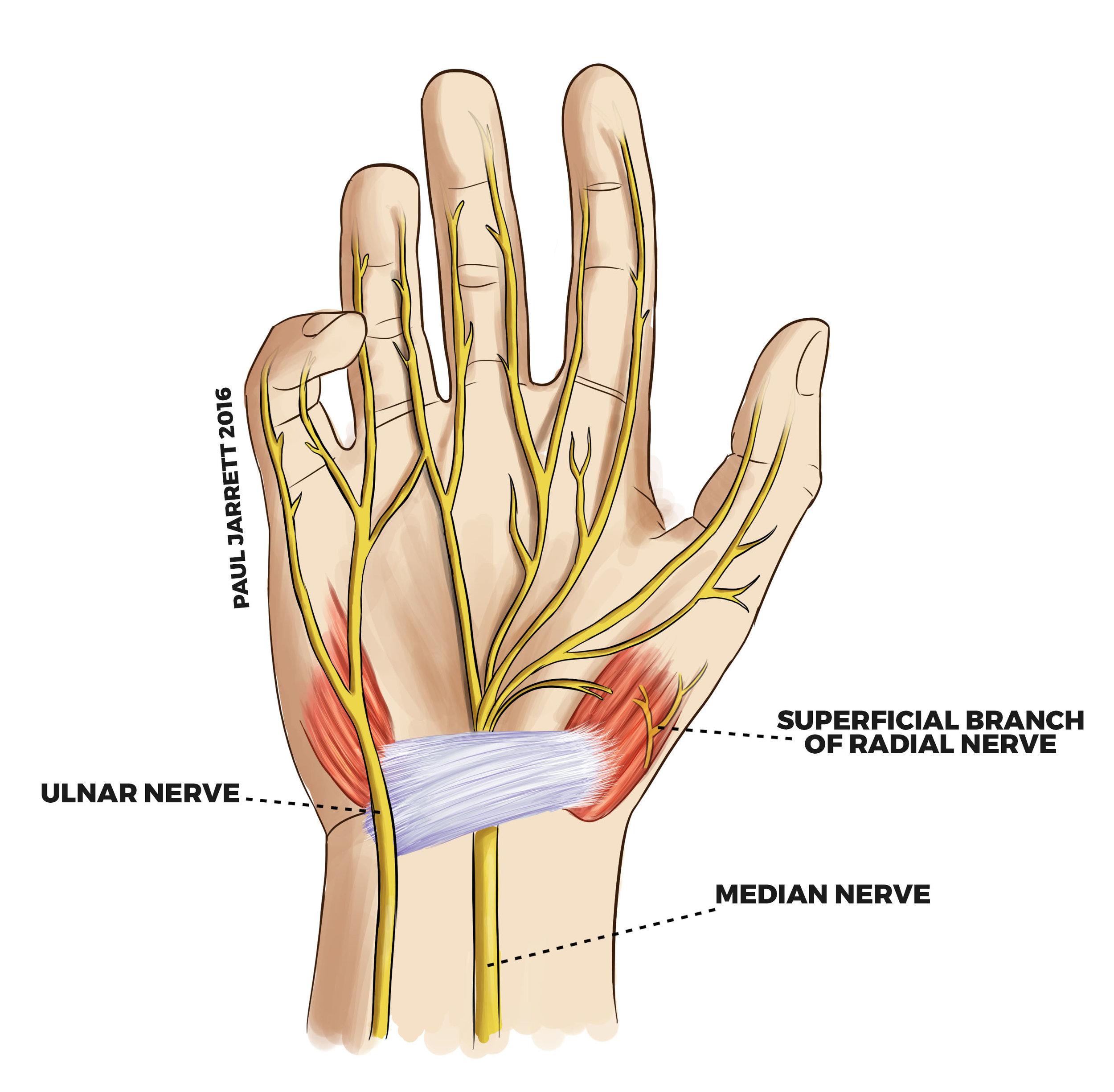 hand nerves pain chiropractic burke chiropractor.jpg