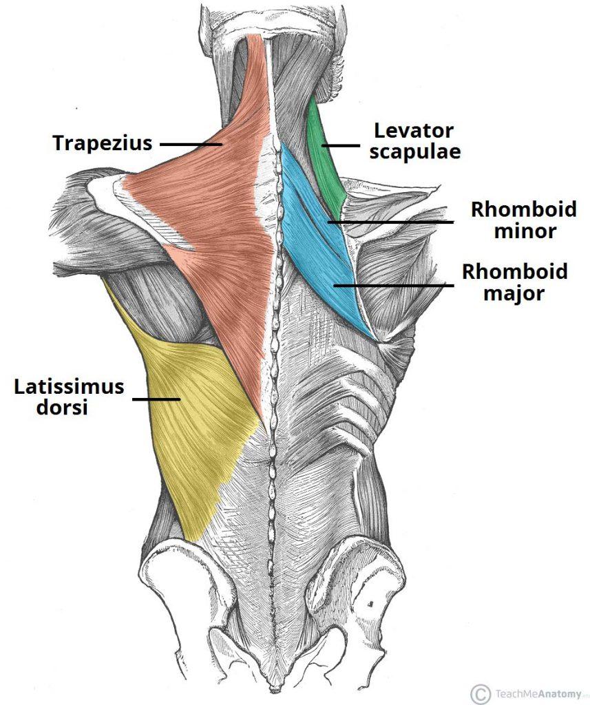 upper back pain chiropractor burke chiropractic headache.jpg