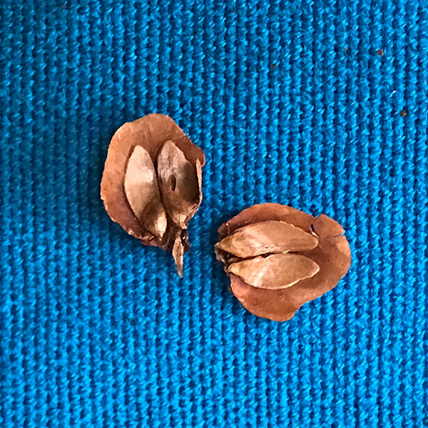 seeds that failed to fall out
