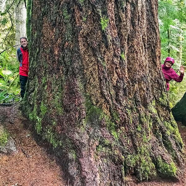 big Douglas-fir