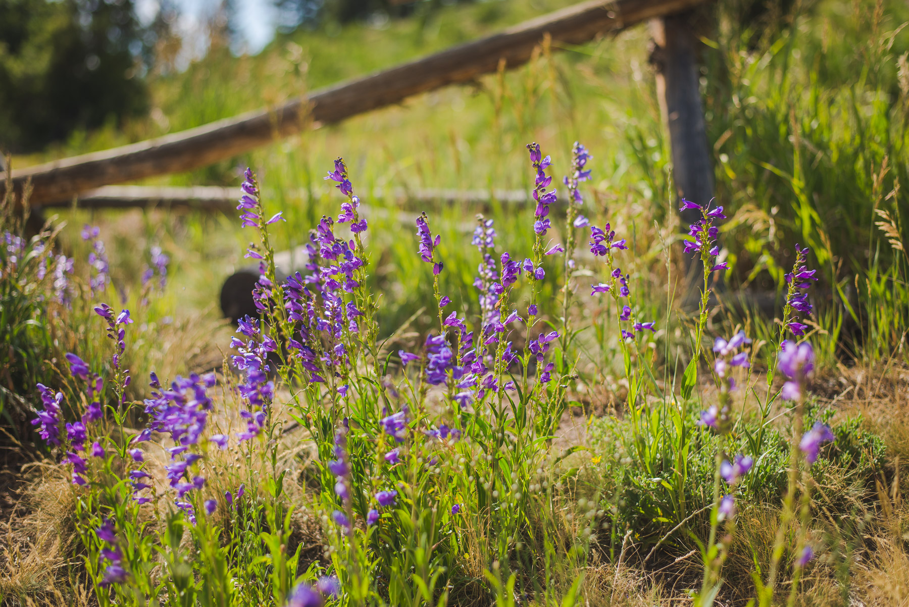 colorado bride and groom small wedding purple wildflowers | summit mountain weddings