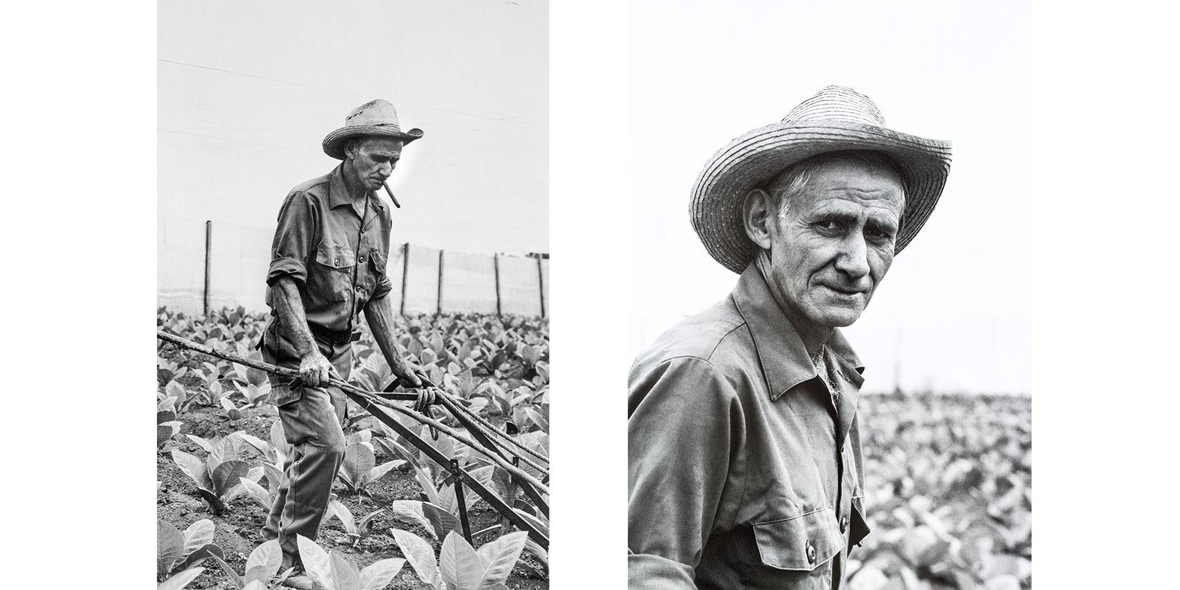 Legendary Cuban Farmer