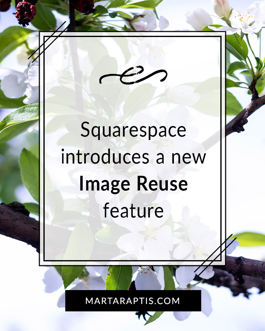 Squarespace introduces a new Image Reuse feature