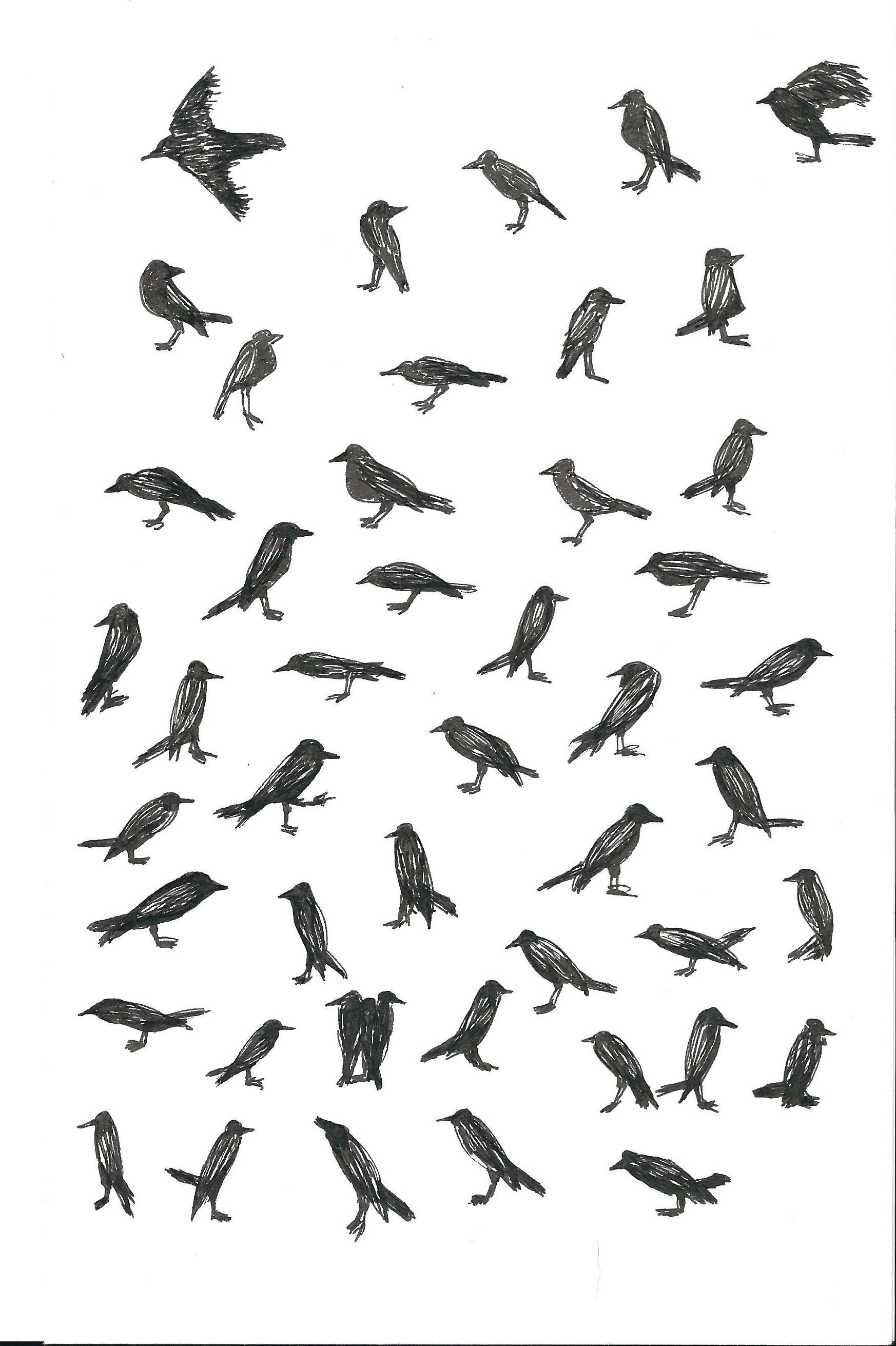 Birds,  sketchbook. Pen and ink