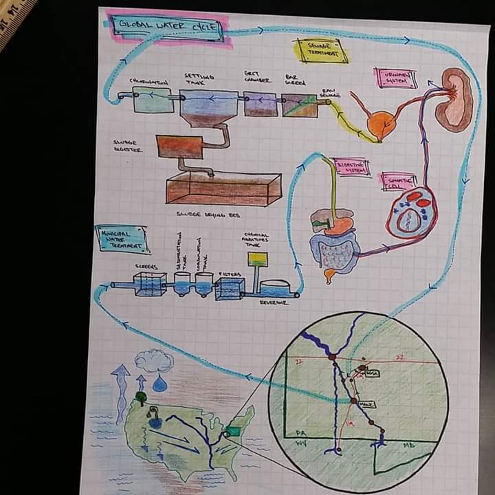 Global Water Cycle , (class notes), Ink and colored pencil