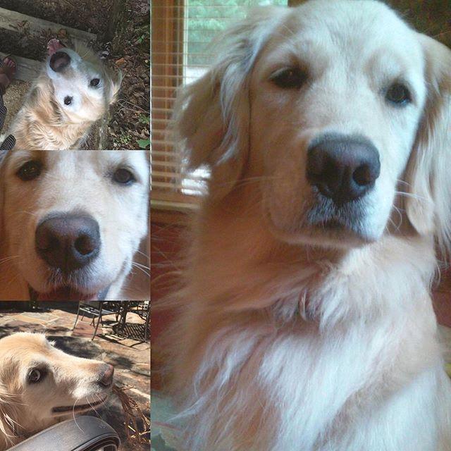 Jazzy! #nationaldogday #goldenretriever #golden #mygirl #dogsofinstagram