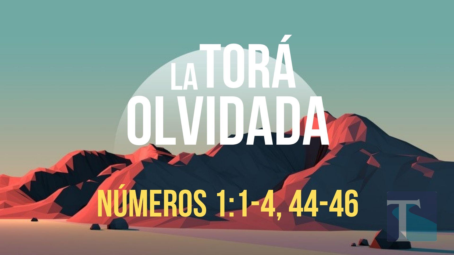 La Tora Olvidada 2-2.jpg