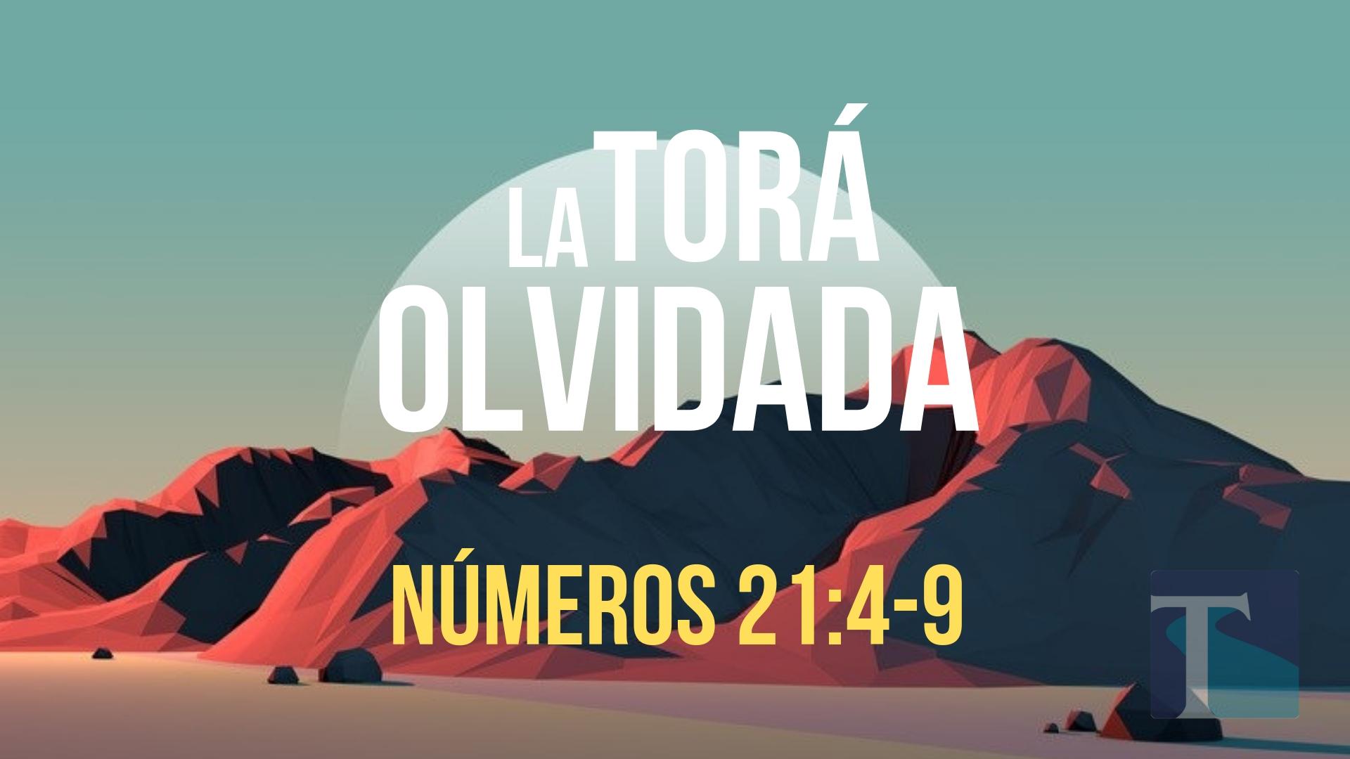 La Tora Olvidada 2-3.jpg