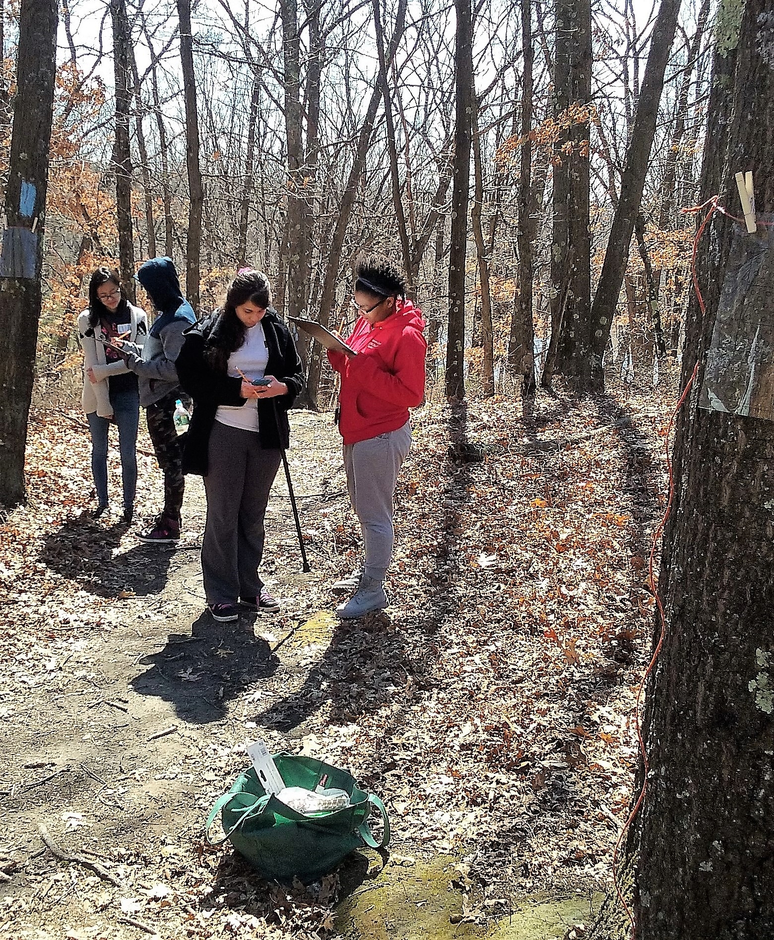 Conducting research on lichens at the Gulf of Maine Institute
