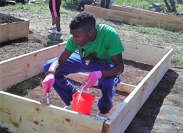 Preparing community garden beds for planting