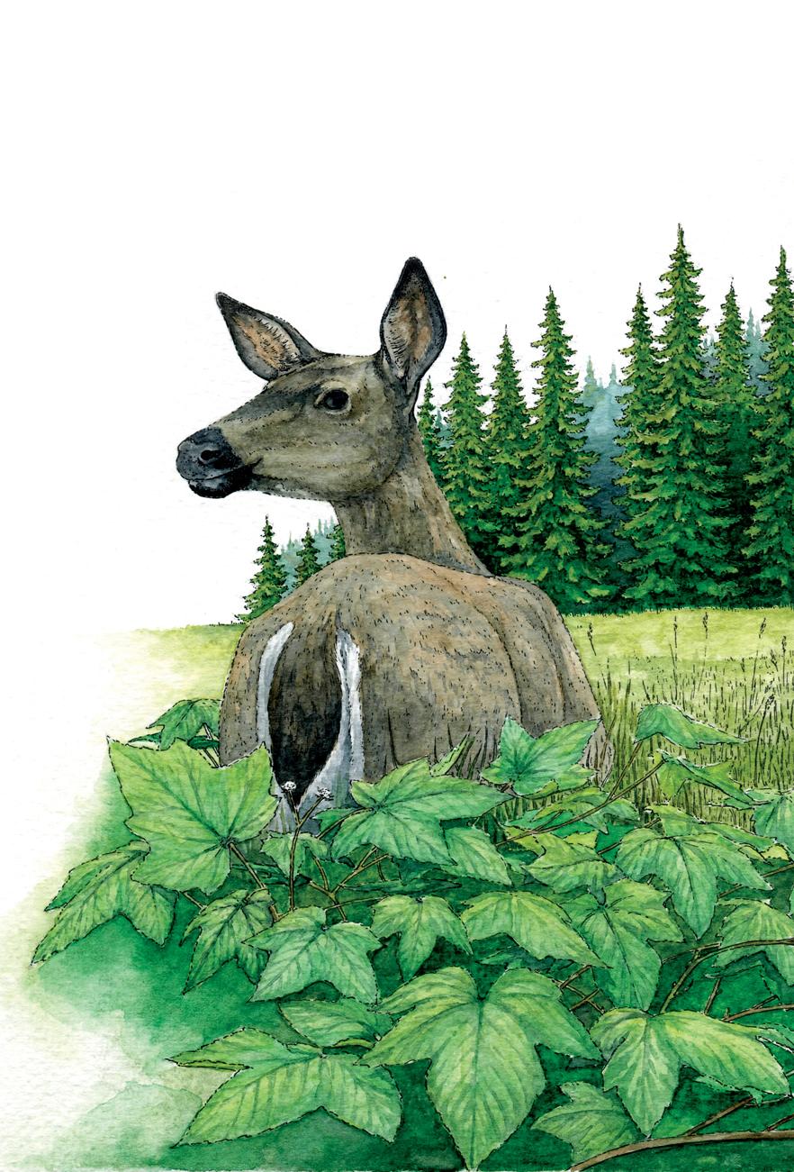 Deer_RGB.jpg