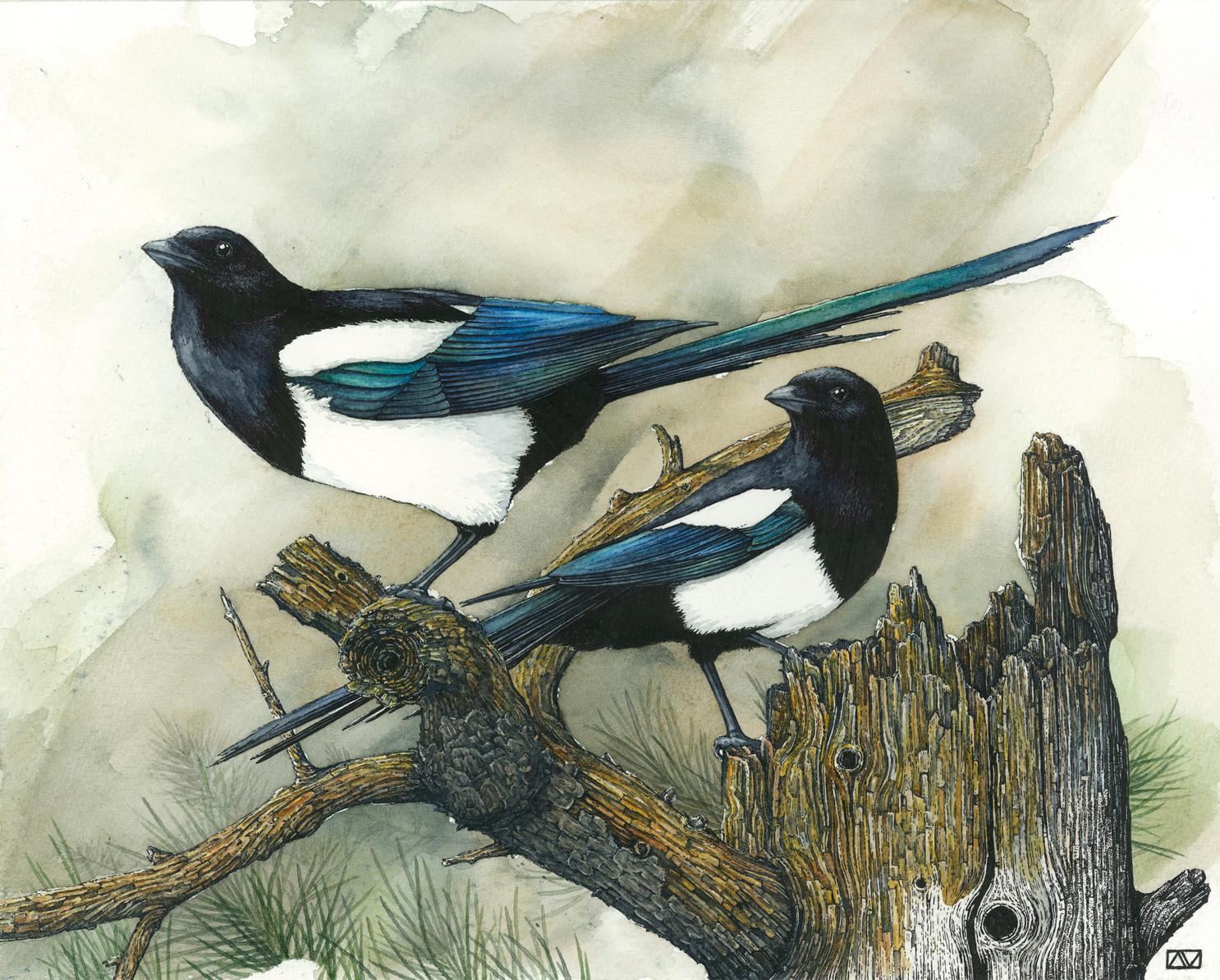 Magpies_RGB.jpg
