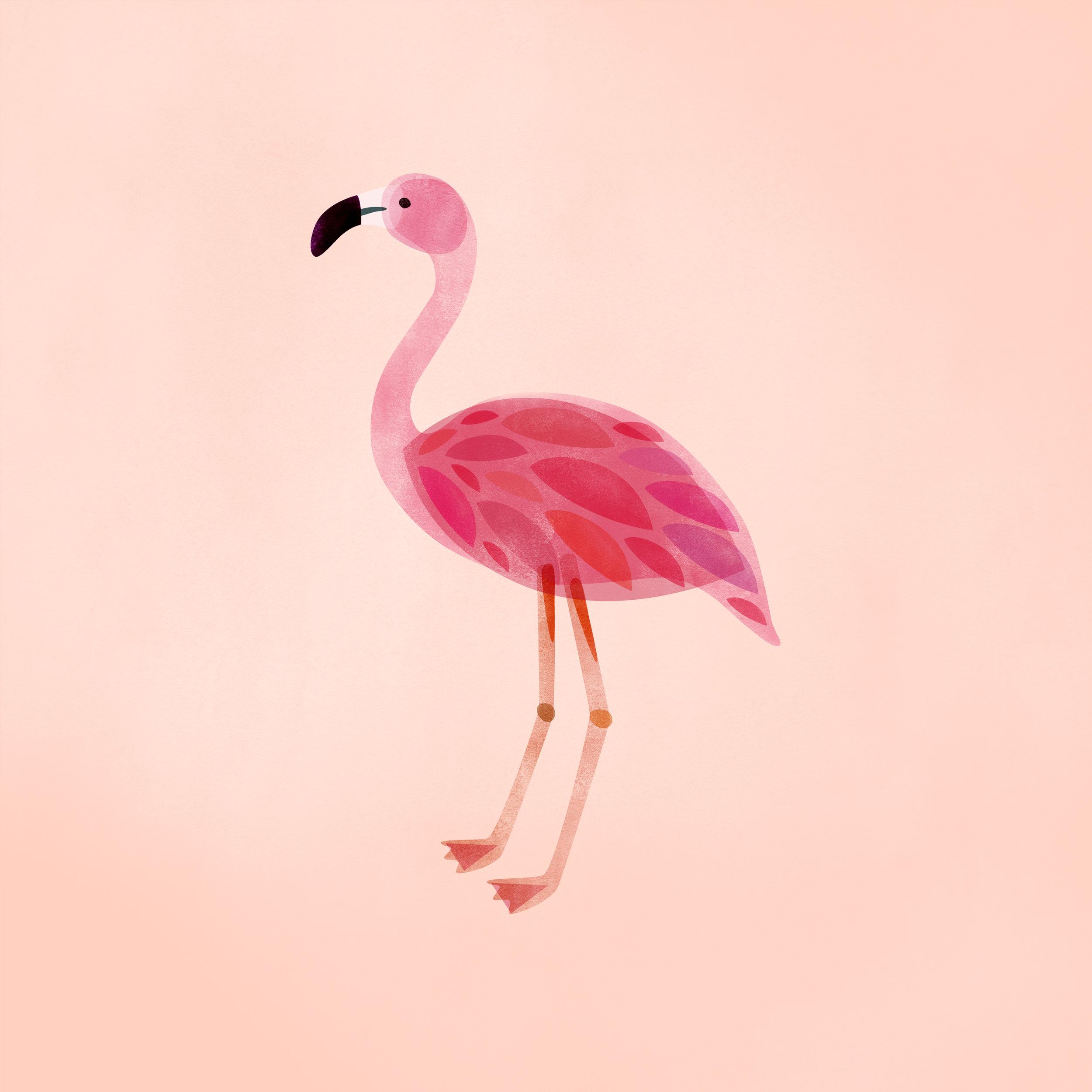 flamingo2 1.jpg