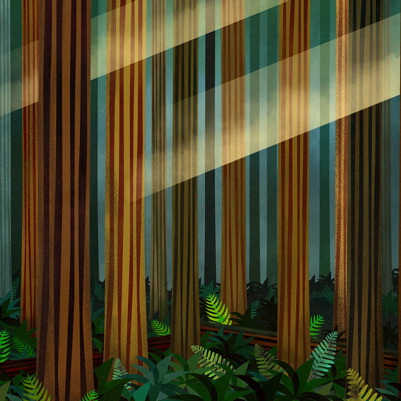 bearforest.jpg