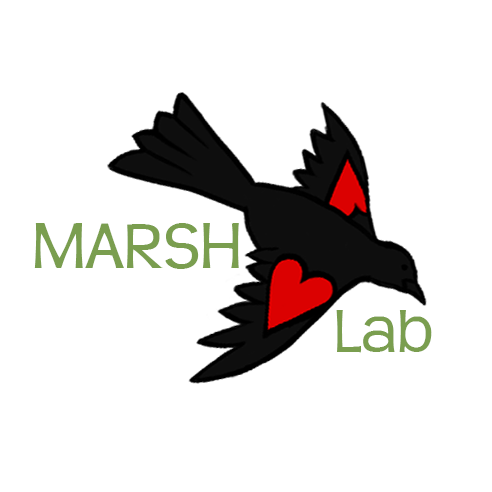Allie Marsh Lab Logo Small.png