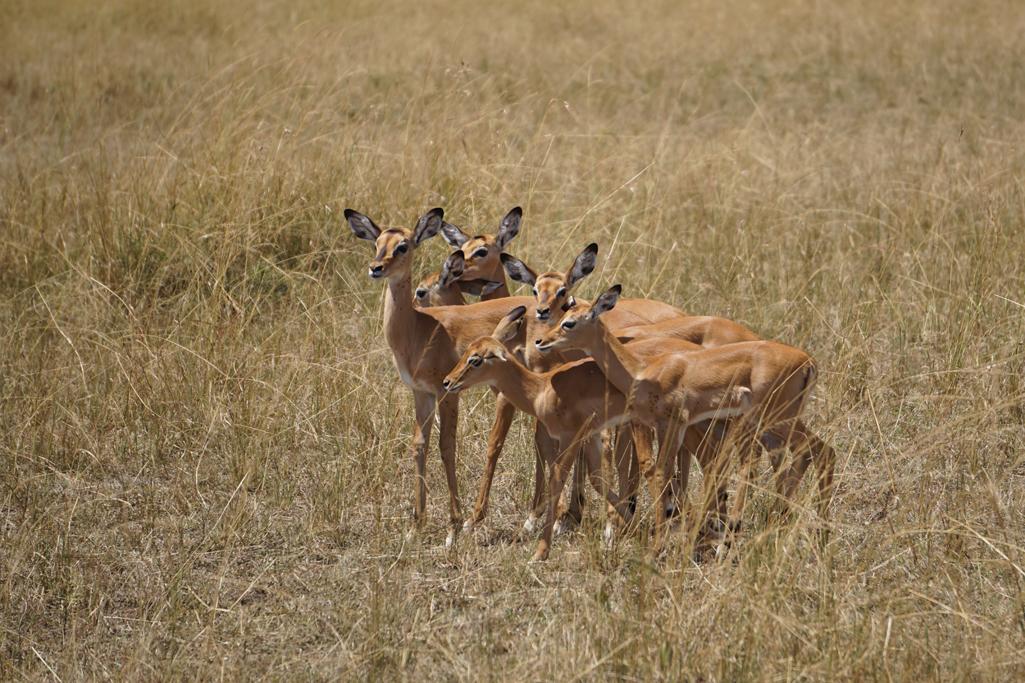 Gazelle Girls 20 X 30.jpg