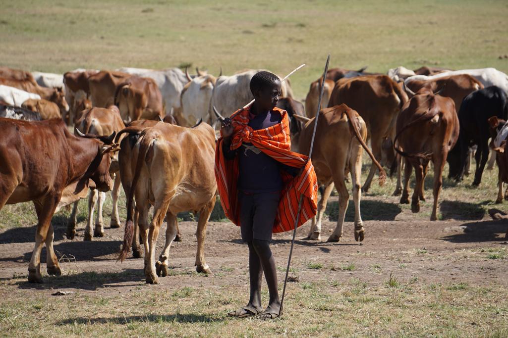 Boy Herder 30X20.jpg