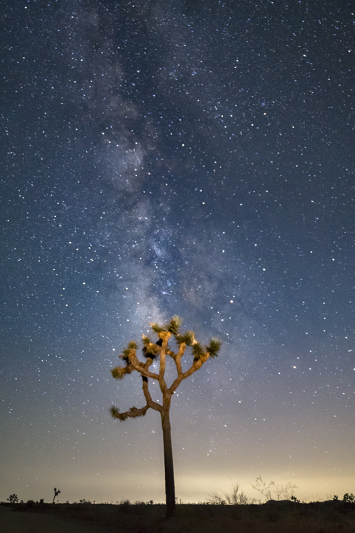 Joshua Tree MIlky Way Saber.jpg