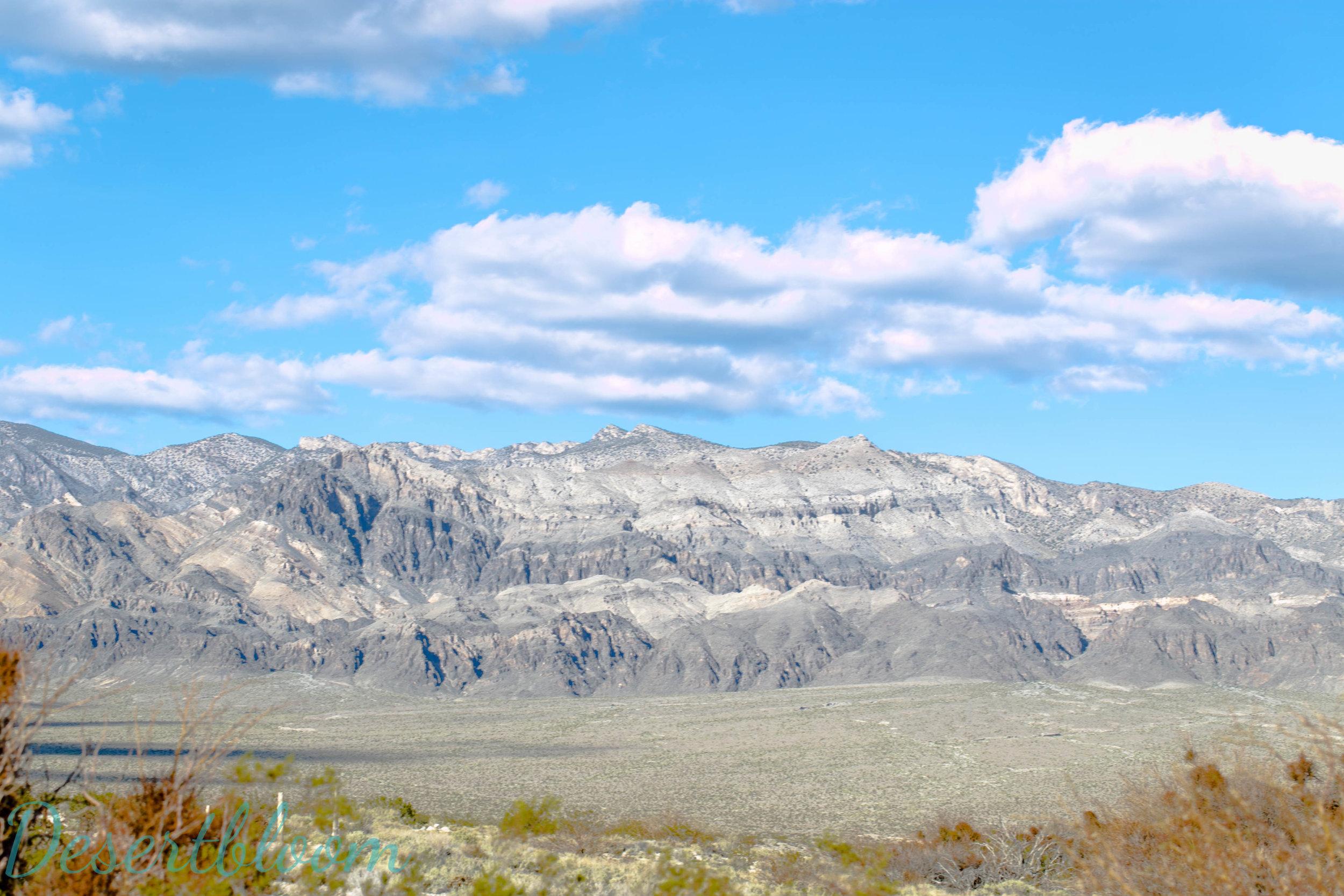 Desertbloom Photography (2 of 10).jpg
