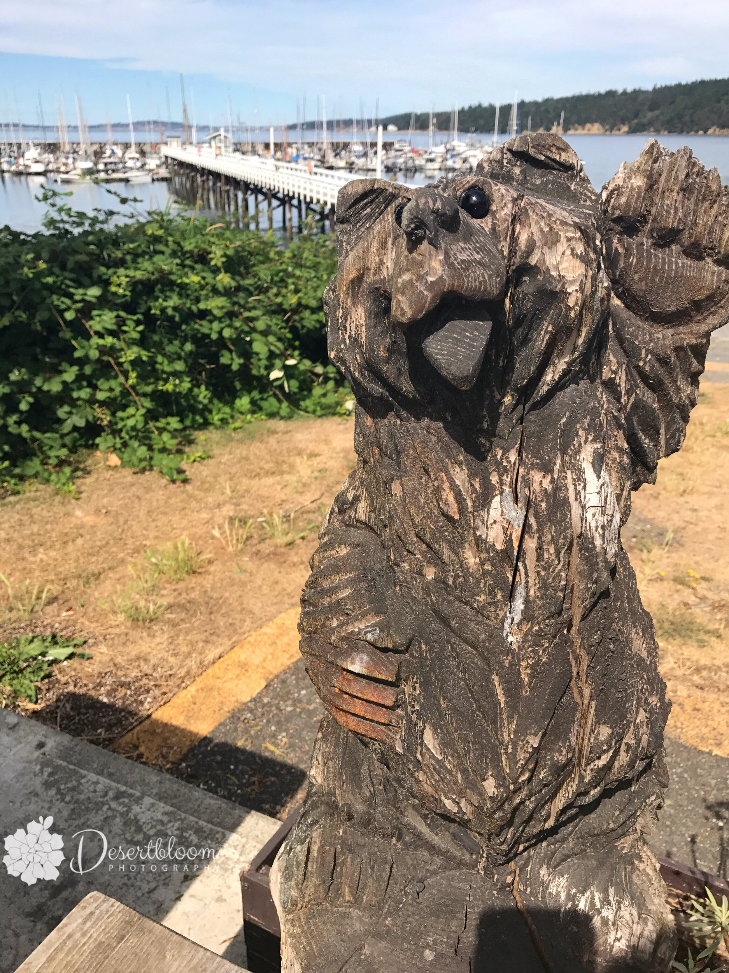 Port Hadlock - not much there but the private marina and this bear