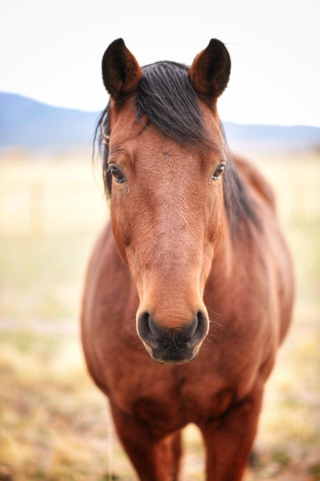 I love horses, and captured this handsome horse while on Reeder Mesa, near Grand Junction, Co.