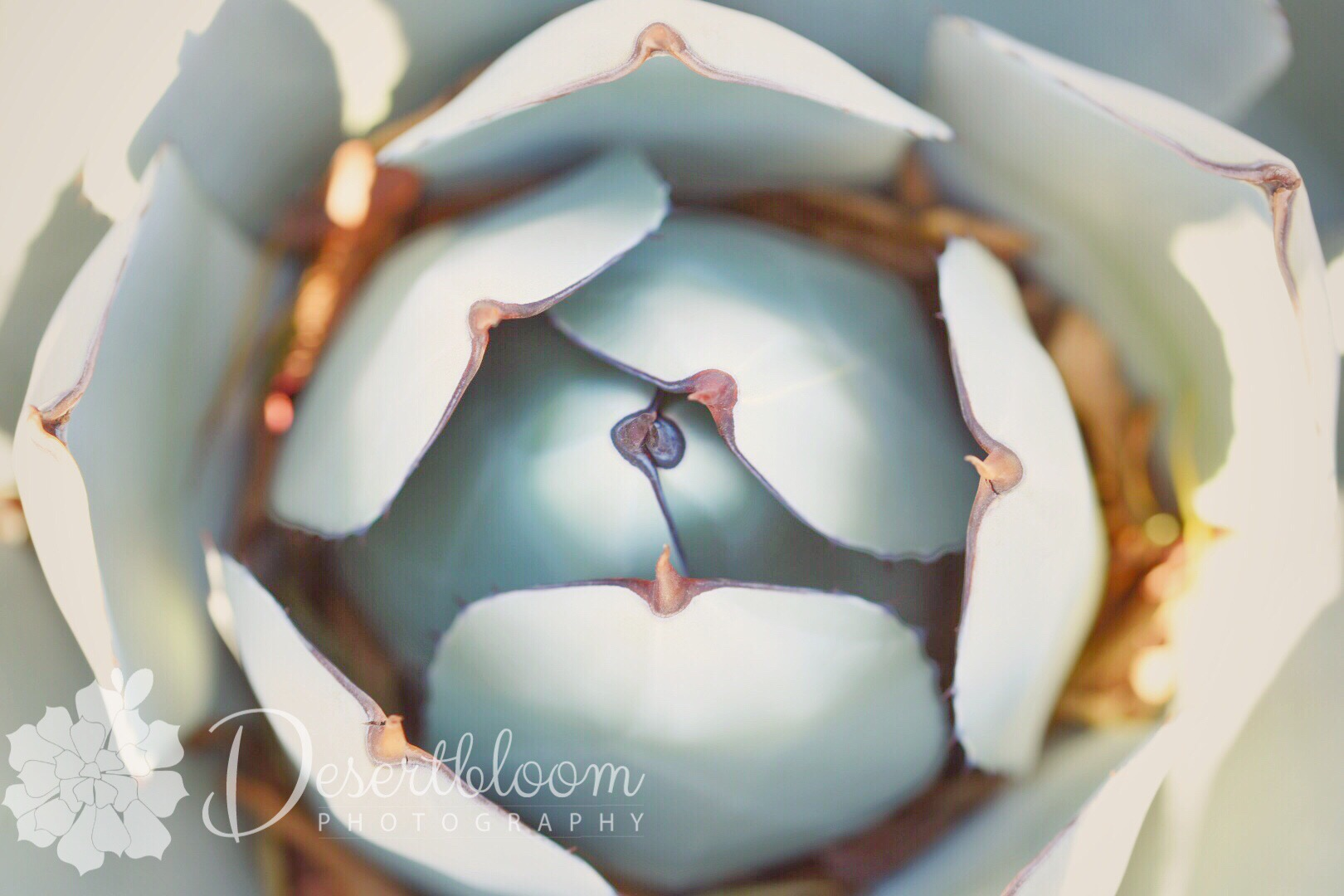 This desert succulent was soooooo pretty! I love symmetry in nature.