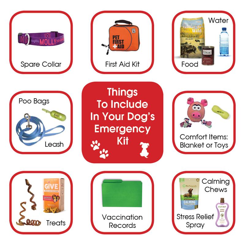 dog emergency kit infographic