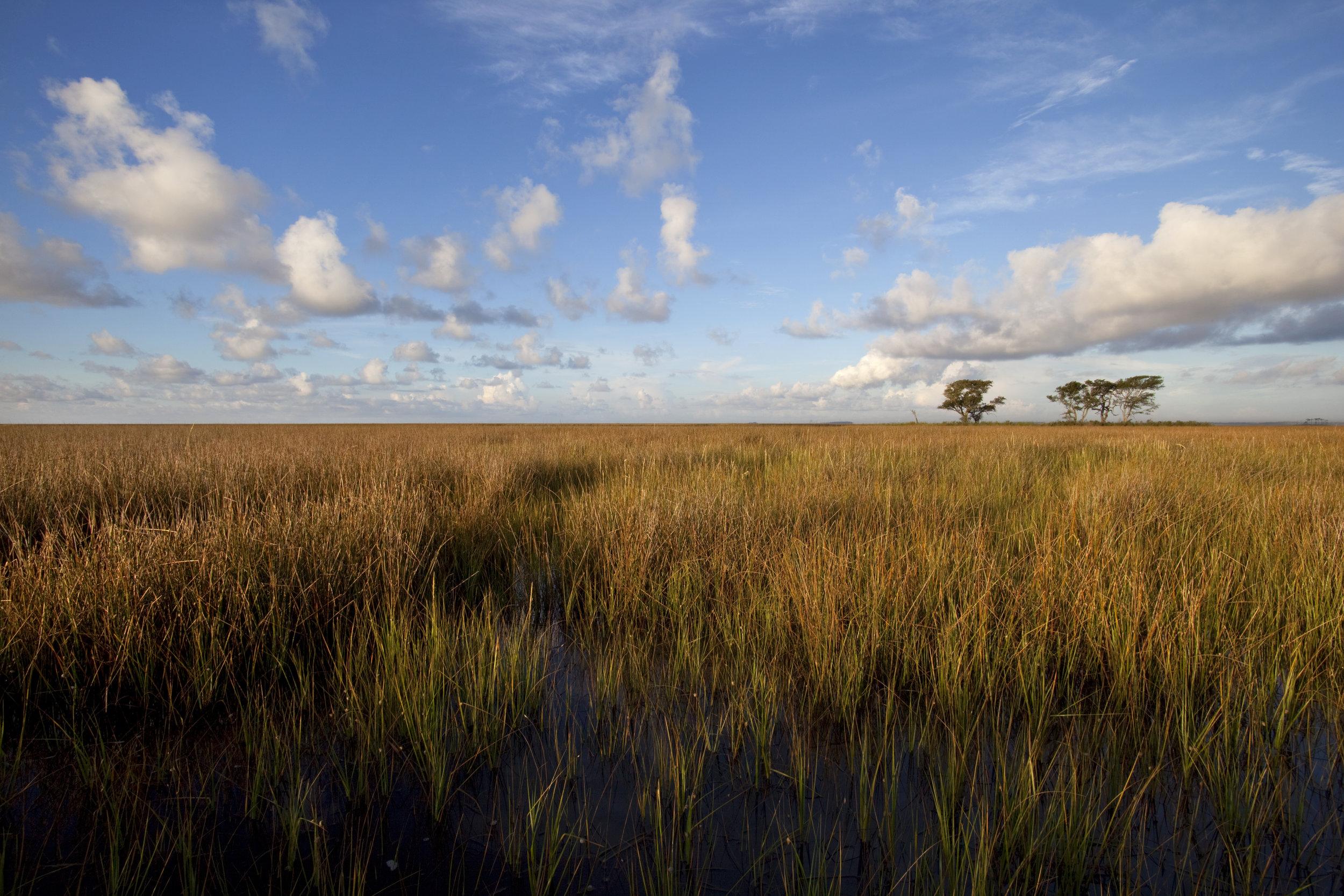 Grand Bay Savannah.jpg
