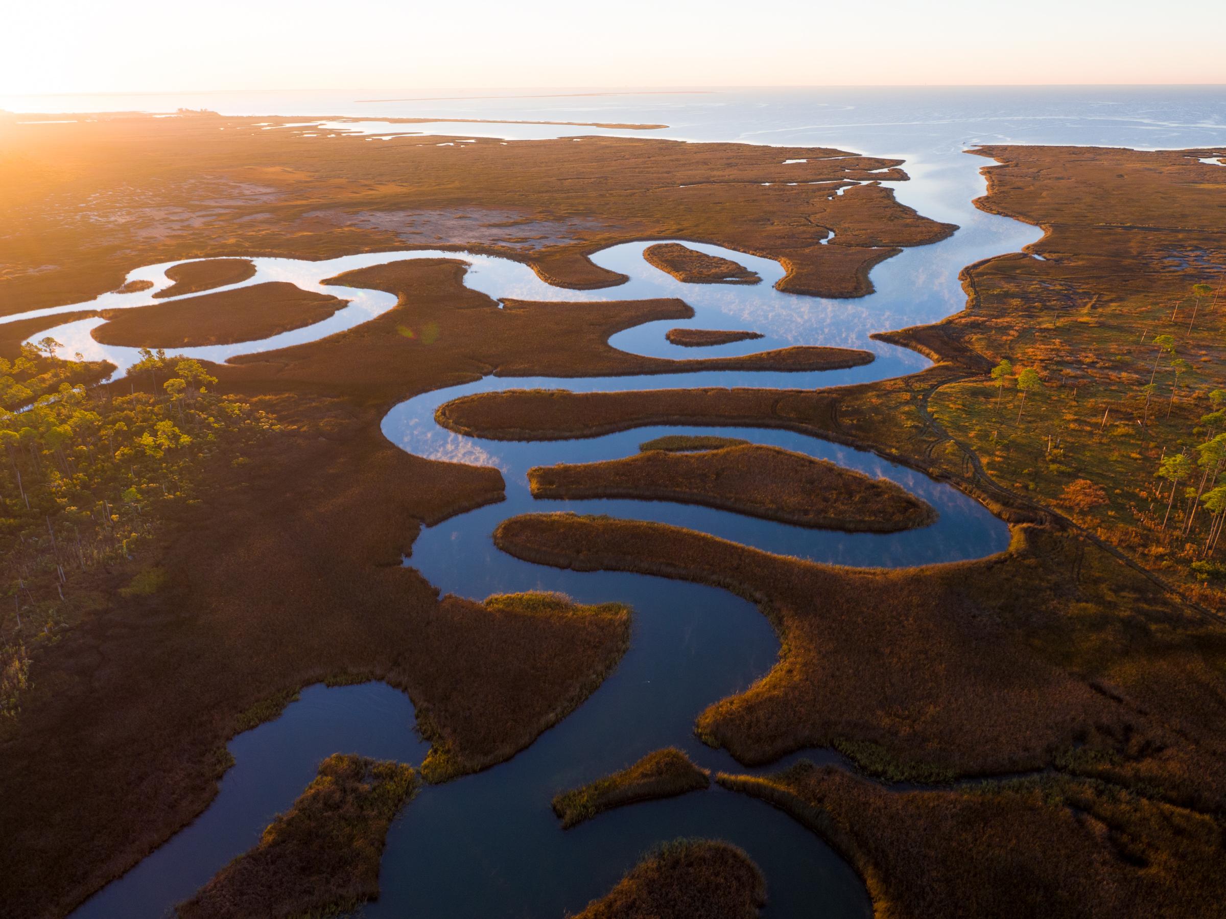 Alabama Estuary.jpg