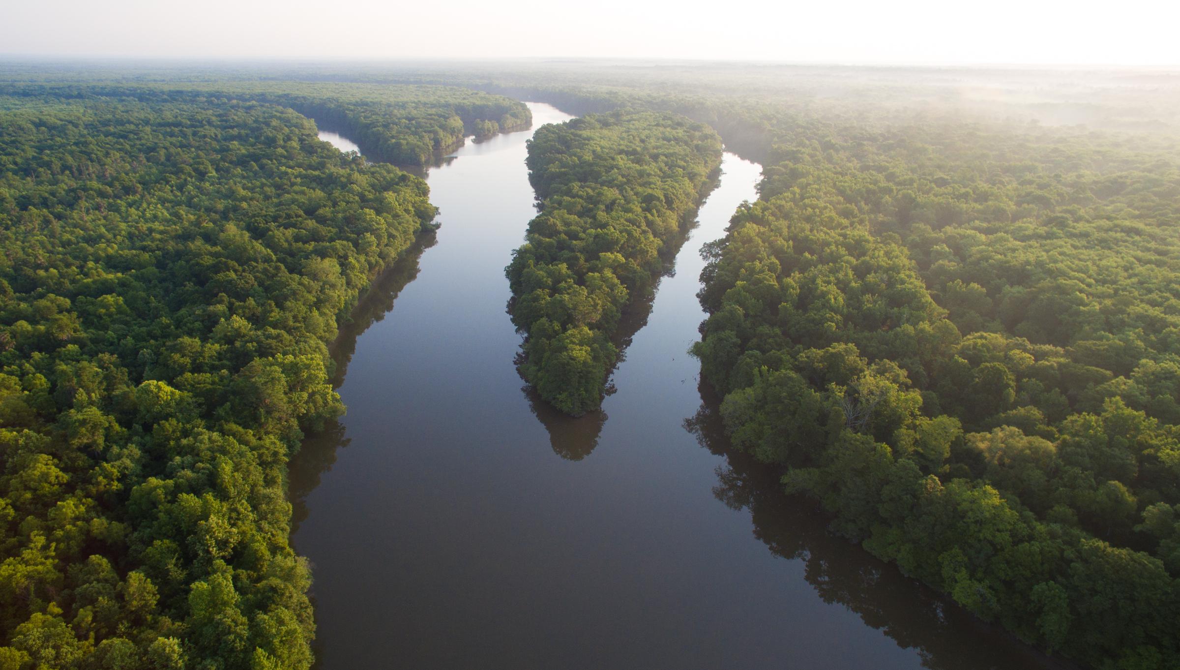 Tensaw River.jpg