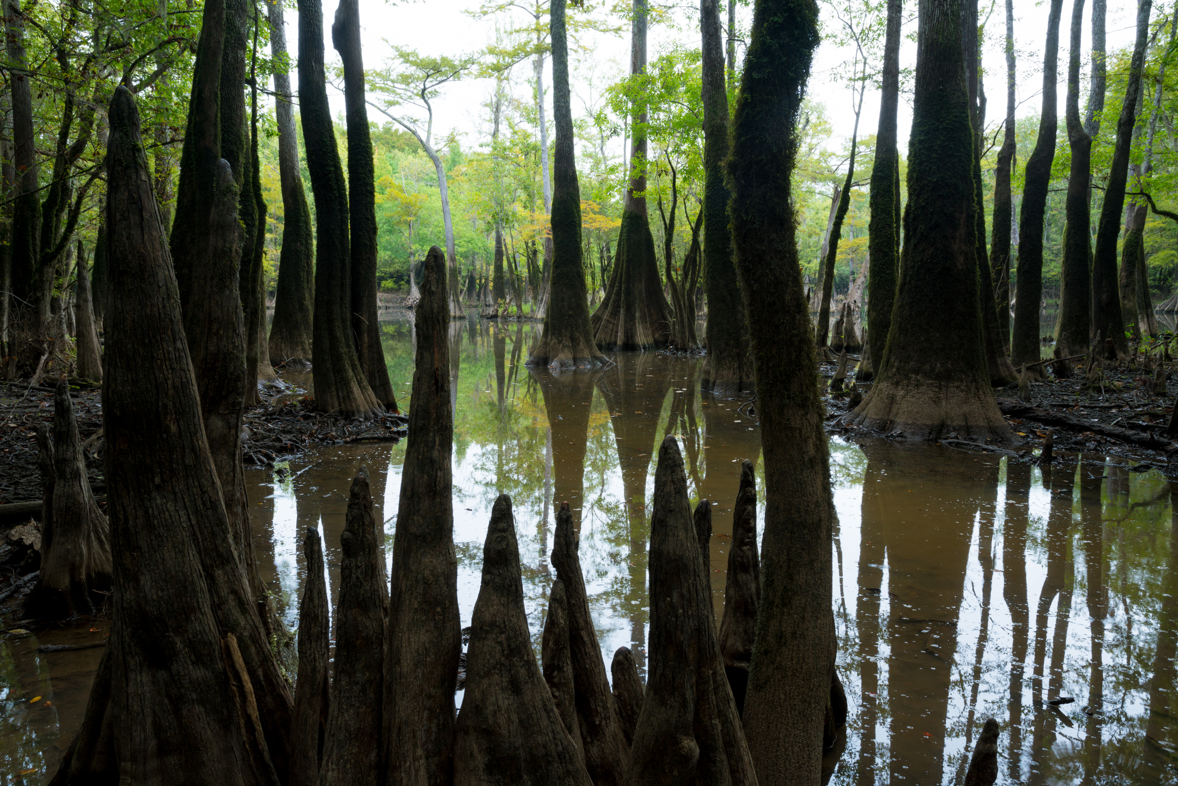 Delta Cypress Swamp.jpg