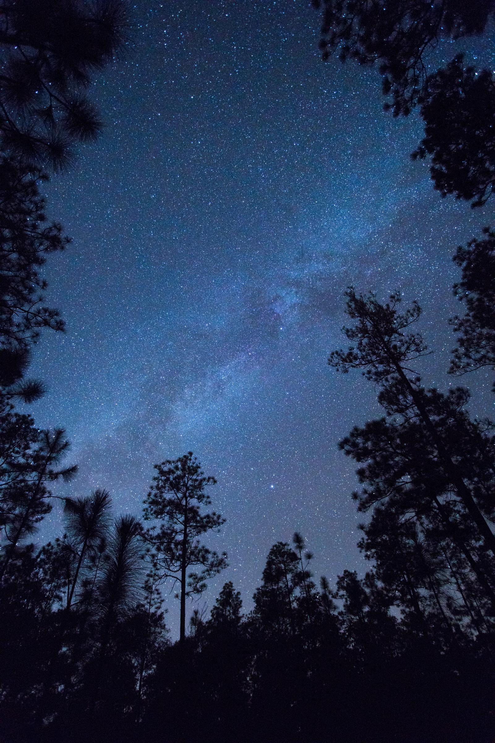 The Milky Way in Longleaf.jpg