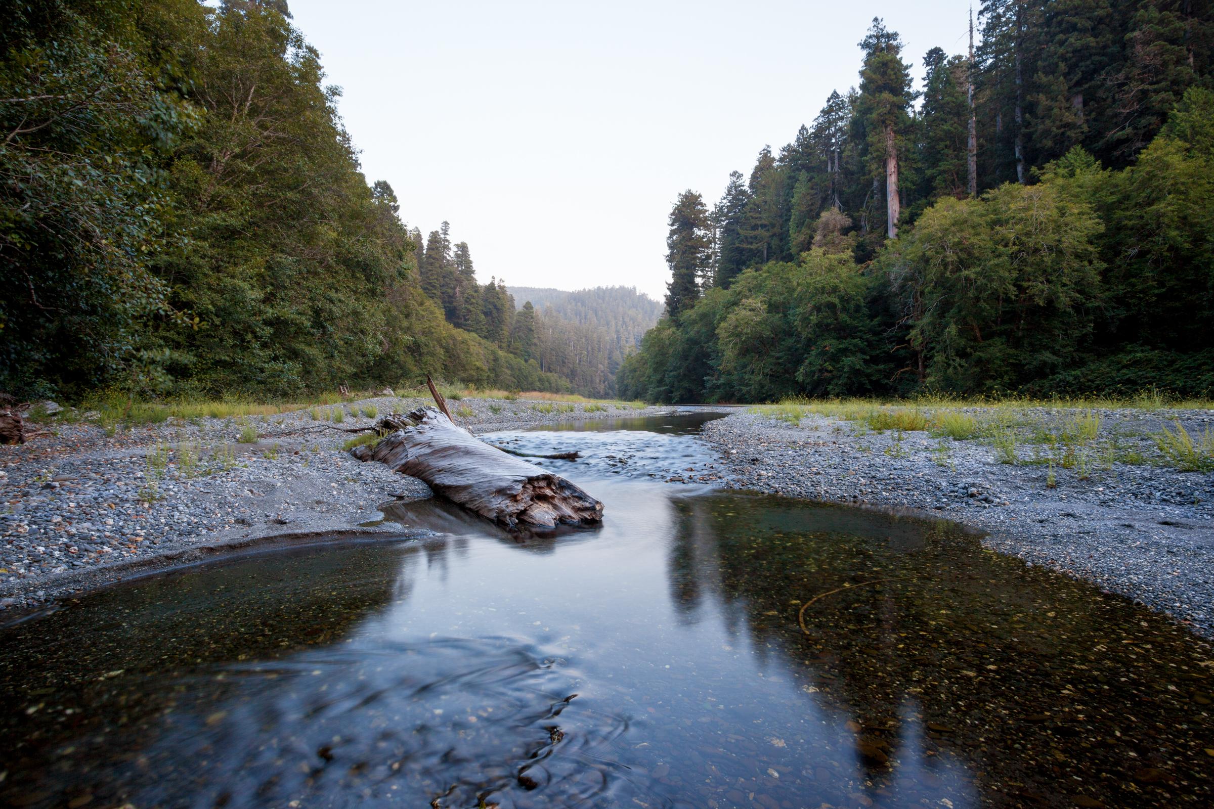 Redwood Creek.jpg