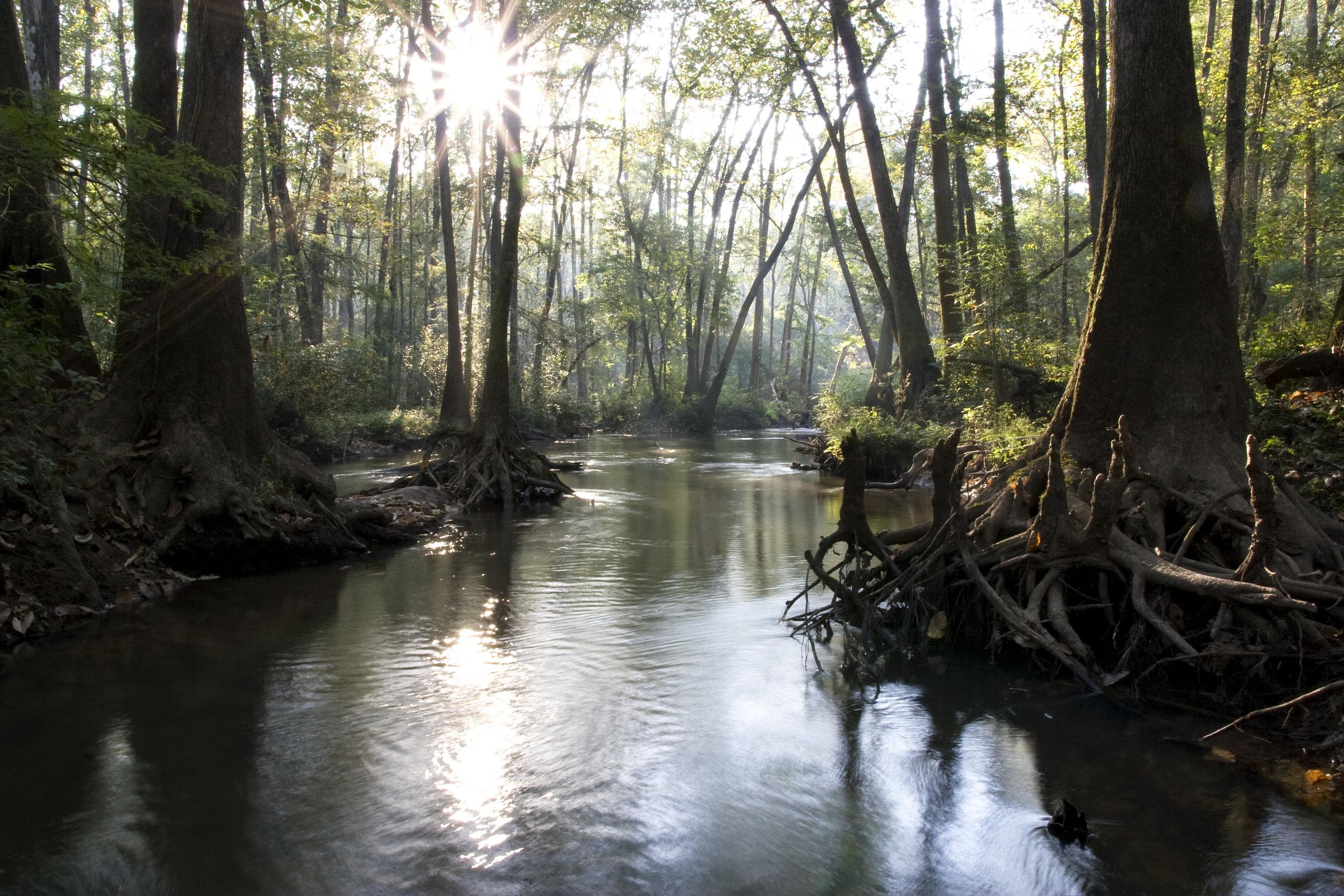 Choctawhactee Swamp.jpg