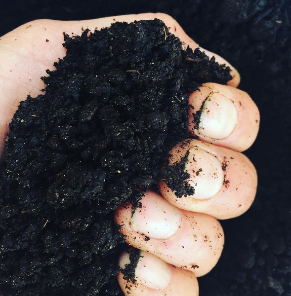Adding Organic Matter (OM) - like compost, to your garden soil creates the foundation of health for all your plants, helps create drought resistance, and boosts their immune system, too. Good compost is teeming with beneficial fungi and bacteria that act like probiotics for your soil. Compost and organic matter in general is the key to creating lush, healthy gardens!