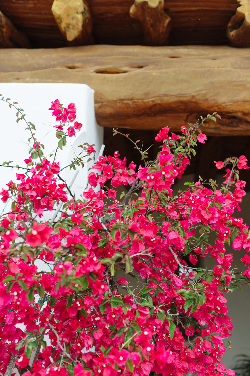 bougainvillea, ibiza wedding