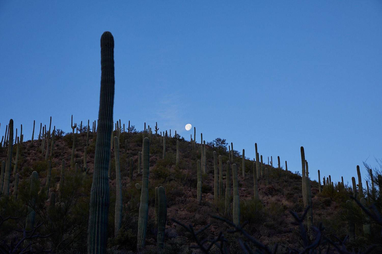 Sunrise and the Moon, Tucson  Photo: Lynda Churilla