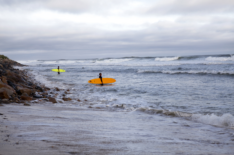 Citrus Surfer  Photo: Lynda Churilla