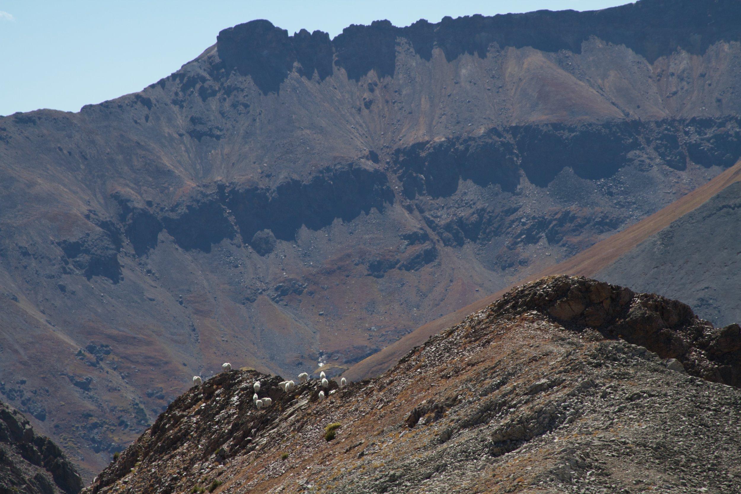 Mountain goats (Boots Ferguson)