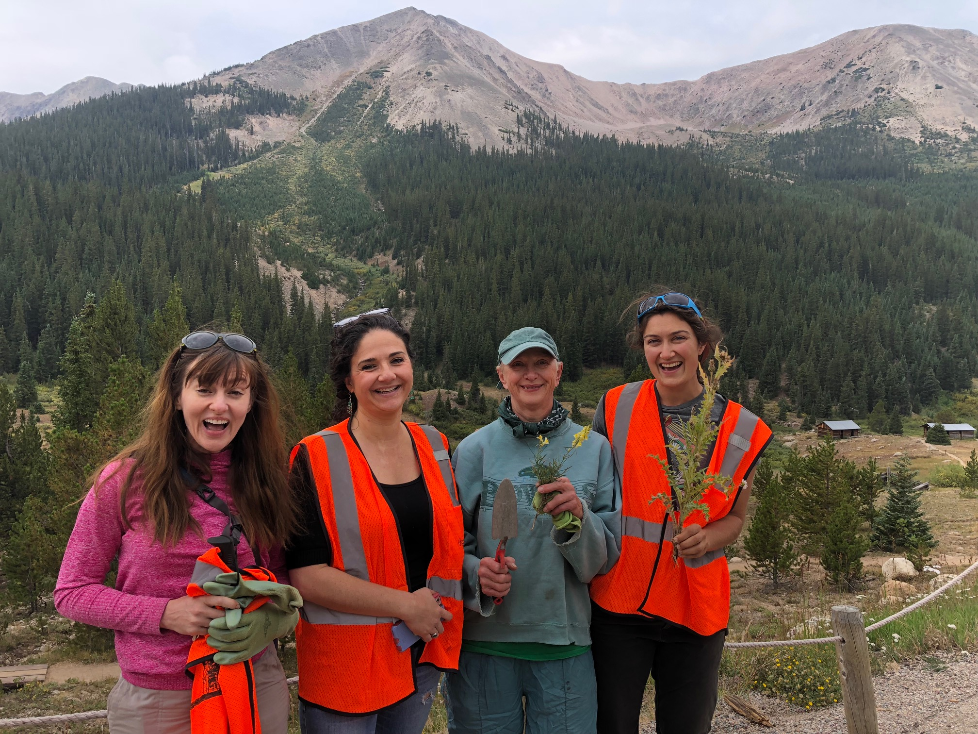Pitkin County Weed Advisory Board group weed pull at the ghost town