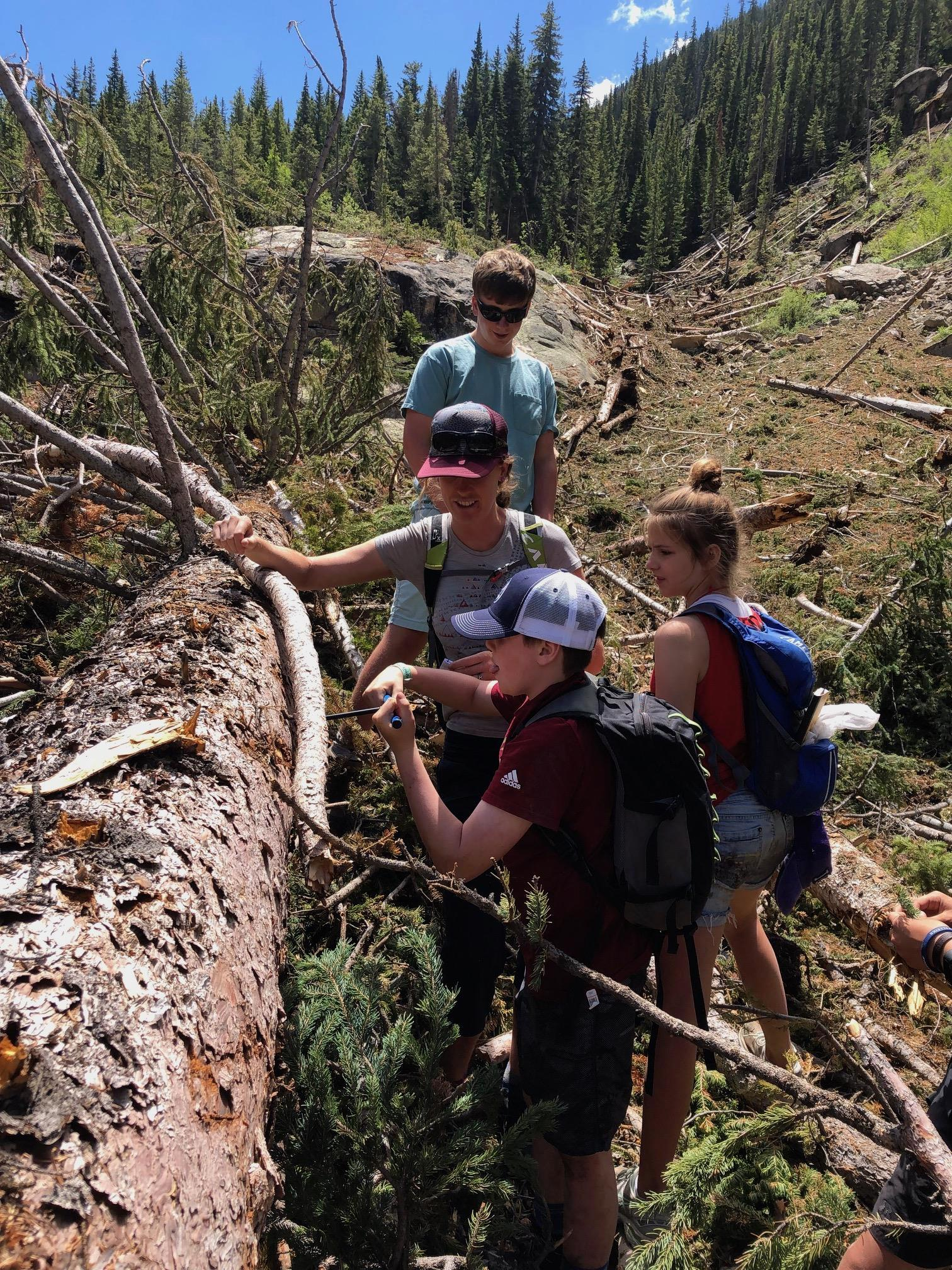 Tree coring in an avalanche zone with ACES at the Grottos