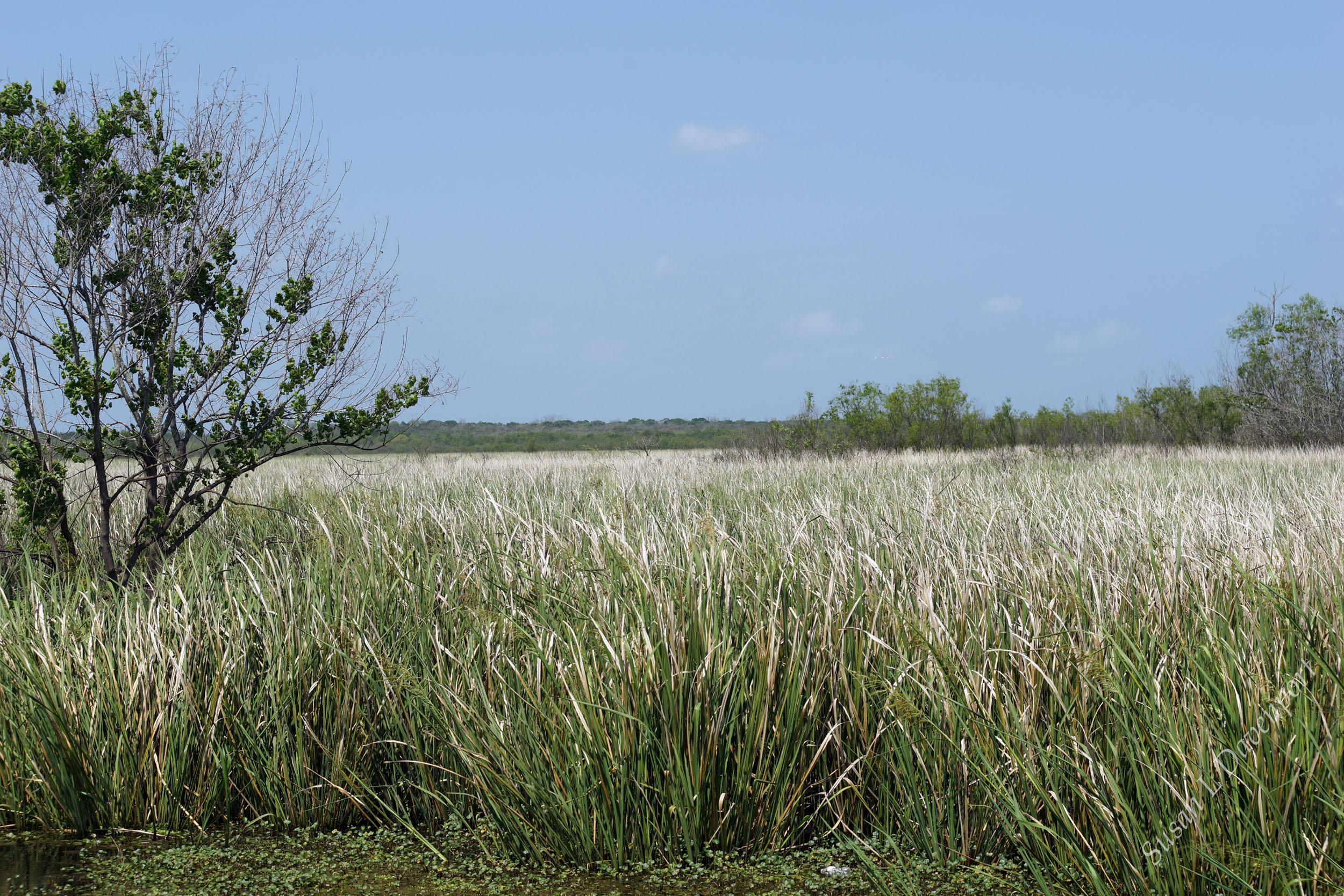 Brazos Bend State Park: Marsh Grass