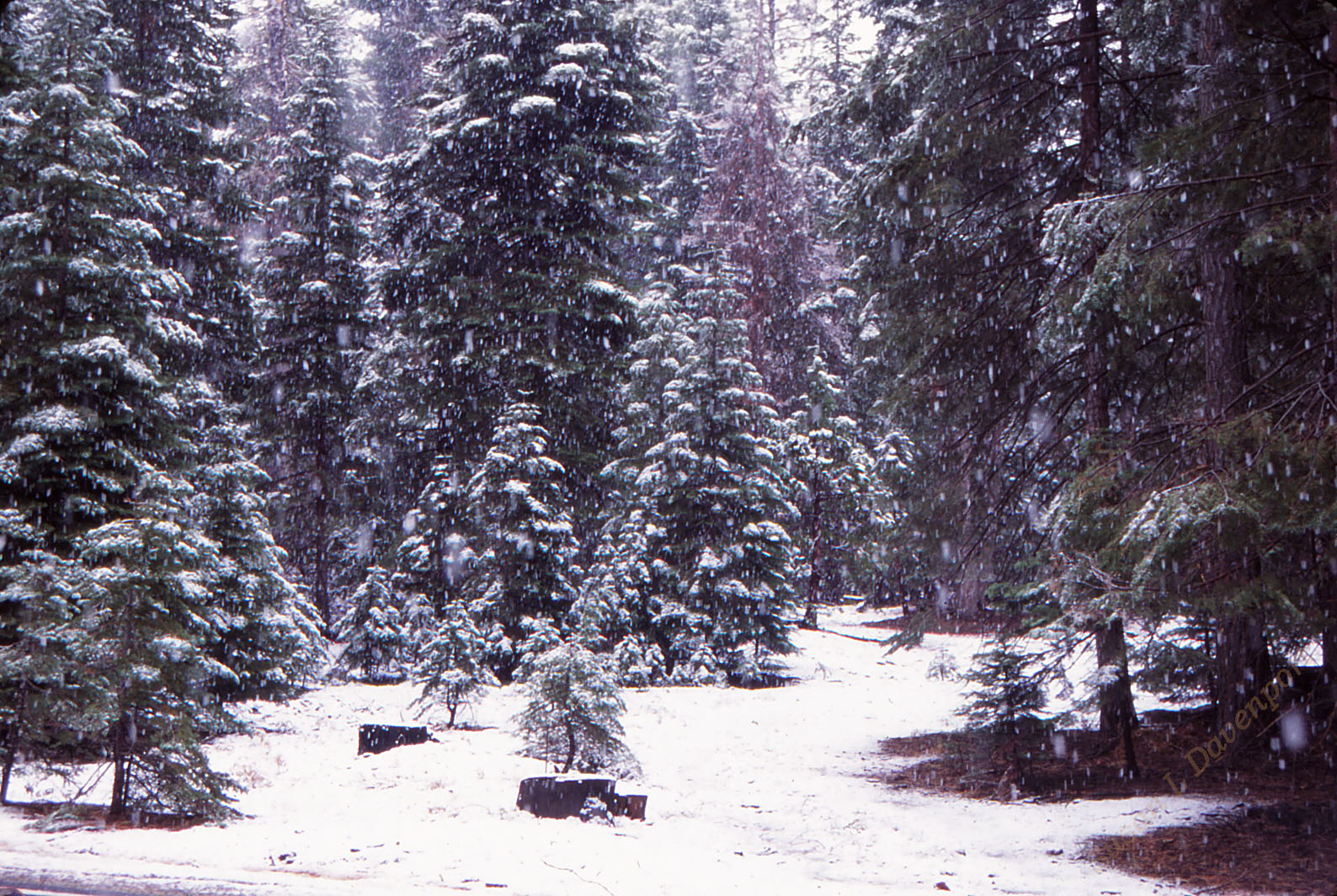 The First Snow of the Year - Photo by Susan L. Davenport
